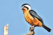 Avian-Paradise-small