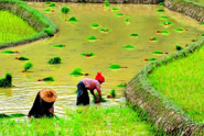 unlocking-myanmar-agricultures-potential-a-key-player-for-economy