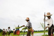 Yangon-Government-to-Boost-Agricultural-Sector
