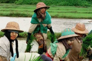 The-Relevance-of-Foreign-Investment-in-Myanmar's-Agricultural-Sector