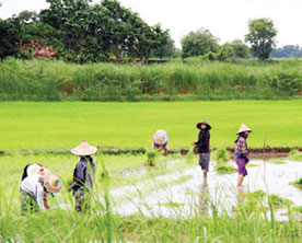 Agricultural-Service-Centres-for-Increased-Production