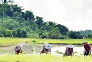 Agriculture-Sector-Development