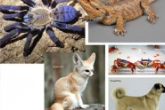 Exotics-Pets-in-Town!